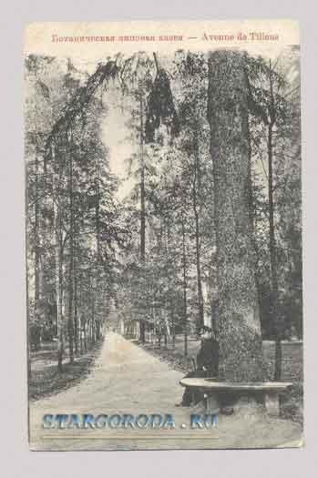 Виды на почтовых открытках. Ботаническая липовая аллея.
